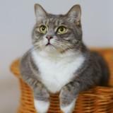 Bons plans Cdiscount : Découvrez les indispensables des French Days pour votre chat