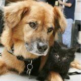Boots, le chien qui aide des chatons orphelins à bien grandir