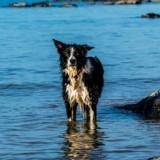 Attaché à une bouée, un chien retrouvé mort noyé