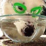 Un chien dressé à faire des bulles ! (Vidéo du jour)