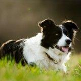 Découvrez le périlleux sauvetage d'un chien coincé en montagne