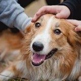 Comment témoigner de l'amour à son chien ?