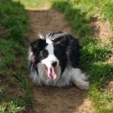 Promenade avec son Border collie : elle voit son chien renifler quelque chose et pousse un cri !