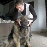 Bien-être du chien avec le Dog massage