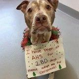 Le vœu de ce vieux chien pour Noël ? Être adopté après 280 jours au refuge