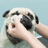 Quel est le meilleur soin des yeux pour chien en 2021 ?