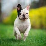 Quizz  : votre chien est-il heureux ?