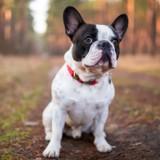 Le Bon Coin : elle poste une annonce très amusante pour une saillie de chien