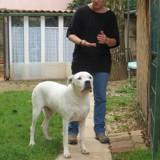 """Association Sans Collier Provence : """"Arrêtons de penser que les animaux de refuge sont agressifs et sans éducation"""""""