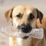 A Istanbul, on recycle des bouteilles en plastique pour nourrir les chiens errants !