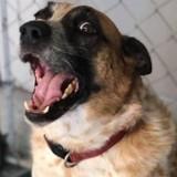 Après avoir passé 7 ans dans un refuge, ce chien a fini par trouver une famille