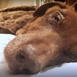 En pleine canicule, elle trouve un chien malade devant sa porte et prend une décision horrible !
