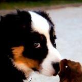 Une parodie de 'Bref' avec un chien (Vidéo du jour)