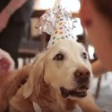 Bretagne, dernier chien héros du 11 septembre, célébre dignement ses 16 ans