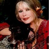 Brigitte Bardot et André-Joseph Bouglione lancent un SOS pour sauver les refuges