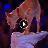 En plein numéro d'équilibriste, il impressionne tout le monde… avec son chien ! (Vidéo du jour)