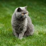 Il explique au prétendant de sa chatte qu'elle n'est pas intéressée, et le chat prend très mal la nouvelle (Vidéo)