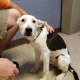 1 semaine après avoir adopté leur chien, ils apprennent la pire des nouvelles !