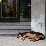 Un couple suit un chien jusqu'à chez lui : un panneau sur la porte leur brise le coeur