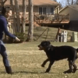Amputé des 4 pattes, ce chien peut à nouveau marcher grâce à ses prothèses