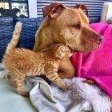 Sauvé, ce minuscule chaton a trouvé en Bubba le chien un second papa !
