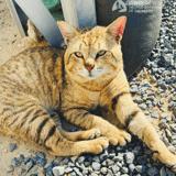 Une femme soldat se bat pour sauver un chat craintif qu'elle apprivoise lors d'une mission au Moyen-Orient