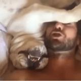 Buddha, le Bulldog qui n'aime pas le matin (Vidéo du jour)