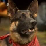 En voiture, il voit un chien paniqué, le suit et appelle les secours (Vidéo)