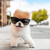 Les 15 animaux stars à suivre sur Instagram !