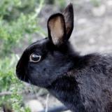 Un sans-abri retrouve un lapin nain volé dans une poubelle