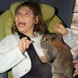 Un énorme élan de solidarité pour retrouver le lapin volé d'une petite fille handicapée