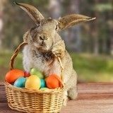 10 adorables lapins qui nous font pousser des cris de ravissement