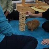 Ce lapin est un véritable champion à Jenga ! (Vidéo du jour)