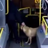 Il entre dans le bus avec un chien dont il ne connait pas le nom, le chauffeur comprend qu'il y a un souci