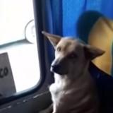 Pour échapper au froid, ce chien a pris le bus tout seul et s'y est installé comme un humain (Vidéo du jour)