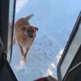 La conductrice de bus voit un chien errant, s'arrête et fait quelque chose de très émouvant