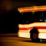 Chien seul sur la route au milieu de la nuit : le chauffeur de bus s'arrête, ouvre les portes et…