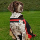Hommage à Buster, le chien héros qui a sauvé des centaines de vies