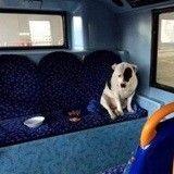 Abandonné dans un bus, ce pauvre chien a passé la nuit enfermé par crainte de morsure