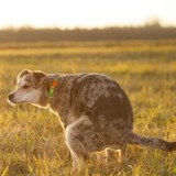 Le calendrier 2019 des chiens qui font caca est sorti !