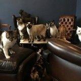 Le premier bar à chats de Paris a fermé