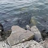 Il se promène près du rivage, voit une cage flotter dans l'eau et se met à courir