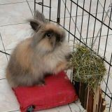 La cage du lapin, de l'achat jusqu'à l'aménagement