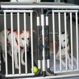 Crash test : vous devez regarder cette vidéo avant de prendre la voiture avec votre chien !