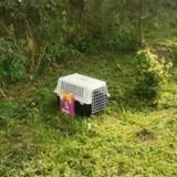 Caisse de transport abandonnée dans la nature : quand il l'ouvre, il a du mal à croire que ce qu'il voit est la réalité