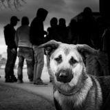 14 histoires, 14 photos, pour soutenir les sans-abris et leurs chiens
