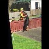 Un chien interrompt la tournée du facteur… pour lui faire un câlin (Vidéo du jour)