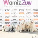 Wamiz Run 2019 : toutes les photos du cani-cross, de la cani-marche et de la blind marche !