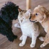 Les bons plans conso de la rentrée pour vos animaux de compagnie