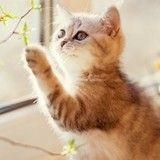 Insolite : elle échappe à un cambriolage grâce à son chat !